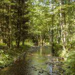 MJC de Sewen - Randonnée nature dans les Vosges